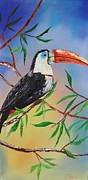 Toucan Originals - Toucan by Kevin  Brown