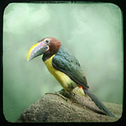 Gary Heller Metal Prints - Toucan perched on a rock - Exotic Bird Metal Print by Gary Heller