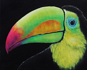 Toucan Originals - Toucan portrait on Black  by Tom Applegate