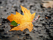 Fallen Leaf Photos - Touch of Green by Irina Wardas