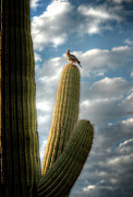 Saguaro Cactus Prints - Touch the Sky  Print by Saija  Lehtonen