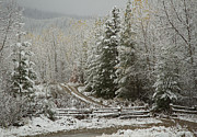North Idaho Prints - Touched by Winter Print by Idaho Scenic Images Linda Lantzy