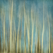 Aspen Trees Prints - Touching The Sky Print by Priska Wettstein