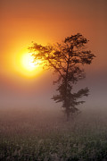 Tree Art Print Framed Prints - Touching the Sun Framed Print by Daniel Zrno