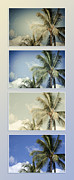 Sharon Mau Digital Art Posters - Toujours subtile et surprenante Couleurs - Hawaiian Coconut Palms - Niu - Cocos nucifera Poster by Sharon Mau