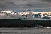 Whale Watching Prints - Touring Alaska Print by Robert Bales