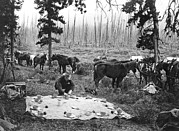 Trail Ride Art - Tourist Horseback Camp Lunch by Underwood Archives