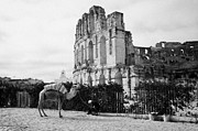 Ancient Rome Art - Tourist Trap Old Man With Camel On Approach To The Old Colloseum From Tourist Car Park El Jem Tunisia by Joe Fox