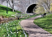 Daffodils Photographs Prints - Town Brook Path Print by Janice Drew