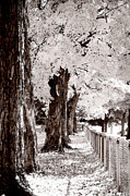 Infra Red Prints - Town Park Print by Jim  Calarese