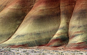 Desert Metal Prints - Traces of Life Metal Print by Mike  Dawson