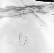 Snow Drifts Photos - Tracks in the Snow by Bernard  Barcos