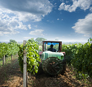 Grapevine Photo Originals - Tractor spraying vineyards with chemicals by Deyan Georgiev