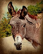 Donkey Originals - Traditional Greek Art by Dimitris Gakis