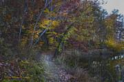 Barbara Bowen - Trail along the Sloppy Floyd Lake