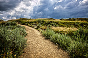 Trail In Badlands In Alberta Canada Print by Elena Elisseeva