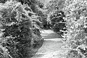 Trail In Black And White Print by Carolyn Ricks