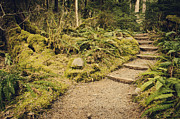 Rainforests Posters - Trail Through the Moss Poster by Heather Applegate