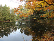 Autumn Leaf On Water Photos - Tranquil Getaway by Brenda Brown
