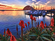 Morro Bay Prints - Tranquil Harbor Print by Beth Sargent