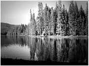 Mounted Fish Prints - Tranquil Reflection in B and W Print by Joyce Dickens