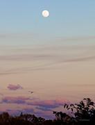 Michelle Wiarda - Tranquil Twilight