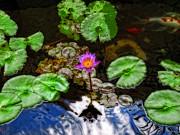 Tranquility - Lotus Flower Koi Pond By Sharon Cummings Print by Sharon Cummings