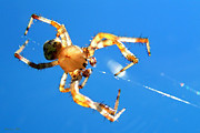 Creepy Digital Art Metal Prints - Trapeze Spider Metal Print by Christina Rollo