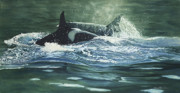 Orca Paintings - Traveling Companions by Connie Ely McClure