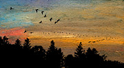 Waterfowl Pastels - Traverse of Gold by R Kyllo