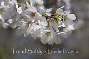 Kathy Clark - Tread Softly - Life is...