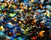 Water Flowing Posters - Treasures Of a Gentle Stream 8 x 10 Poster by Terril Heilman