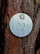 Bill Owen - Tree 1001