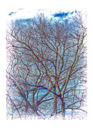 Photo Captures by Jeffery - Tree Against A Blue...