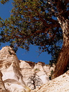 Kasha Katuwe Tent Rocks Prints - Tree Among the Rocks Print by Barbara Dolny-Bombar