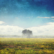 Wolken Prints - Tree And Meadow Print by Dirk Wuestenhagen