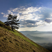 Puy De Dome Posters - Tree and misty landscape Poster by Bernard Jaubert