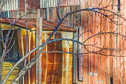 Shed Metal Prints - Tree and rust Metal Print by Jim Wright
