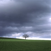 Cornfield Posters - Tree and stormy sky  Poster by Bernard Jaubert