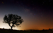 Vishal Kumar - Tree and The Milkyway