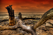 Nigel Hamer - Tree Art