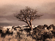 Textured Landscape Prints - Tree at Dusk in Waikoloa Print by Ellen Cotton