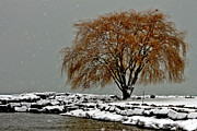 Bruce Patrick Smith - Tree at Edgewater Park