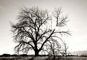 Family Tree Prints - Tree at Harpers Lake Louisville 2 Print by Marilyn Hunt