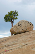 Point Prints - Tree at Olmsted Point Yosemite National Park California Print by Christine Till