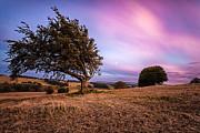 Tree At Sunset Print by John Farnan