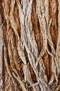 Sue Smith - Tree Bark Abstract