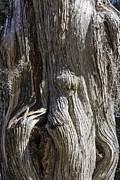 Lynn Palmer - Tree Bark No. 3