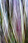 Tree Lines Digital Art Prints - Tree Boughs Abstract I Print by Natalie Kinnear