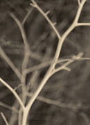 Tree Branches Abstract Brown Gray Print by Jennie Marie Schell